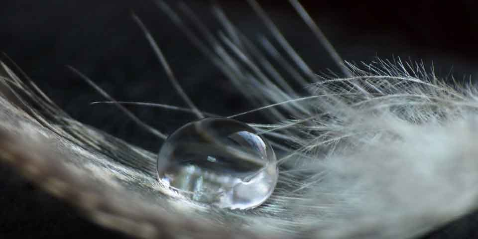 a_drop_on_a_feather-wallpaper-960×640